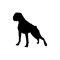 arnes-perro-boxer