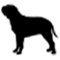 arnes-julius-perro-bullmastiff