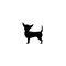 arnes-perro-julius-k9-chihuahua