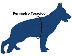 contorno del pecho del perro