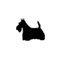 arnes-julius-k9-west-higland-white-terrier