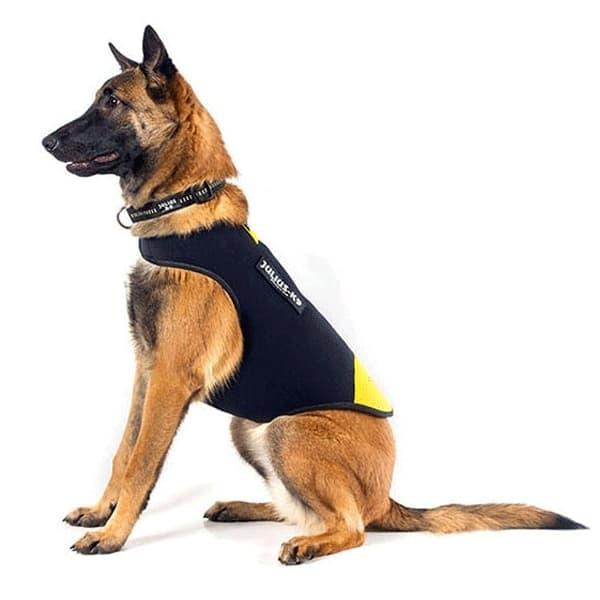 chaqueta de neopreno para perros