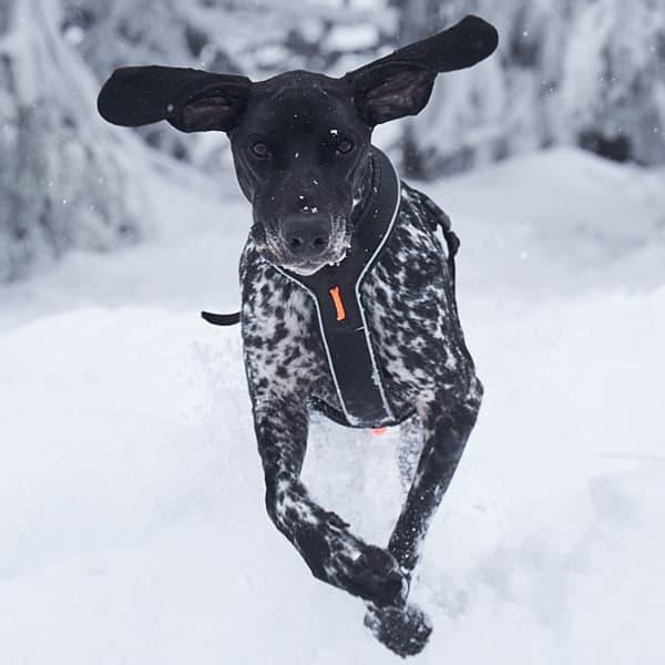 arnés para senderismo y excursionismo con perros